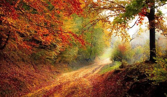 Wir wünschen allen Kindern und Eltern der KGS Hinsbeck schöne Herbstferien. Am 25.10.2020 sehen wir uns hoffentlich alle gesund wieder.